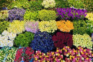 Cách vận chuyển hoa tươi đi xa đảm bảo